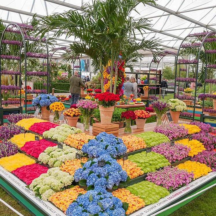 Interesting Facts about the RHS Chelsea Flower Show ...